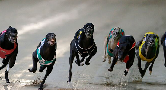 greyhound betting tips